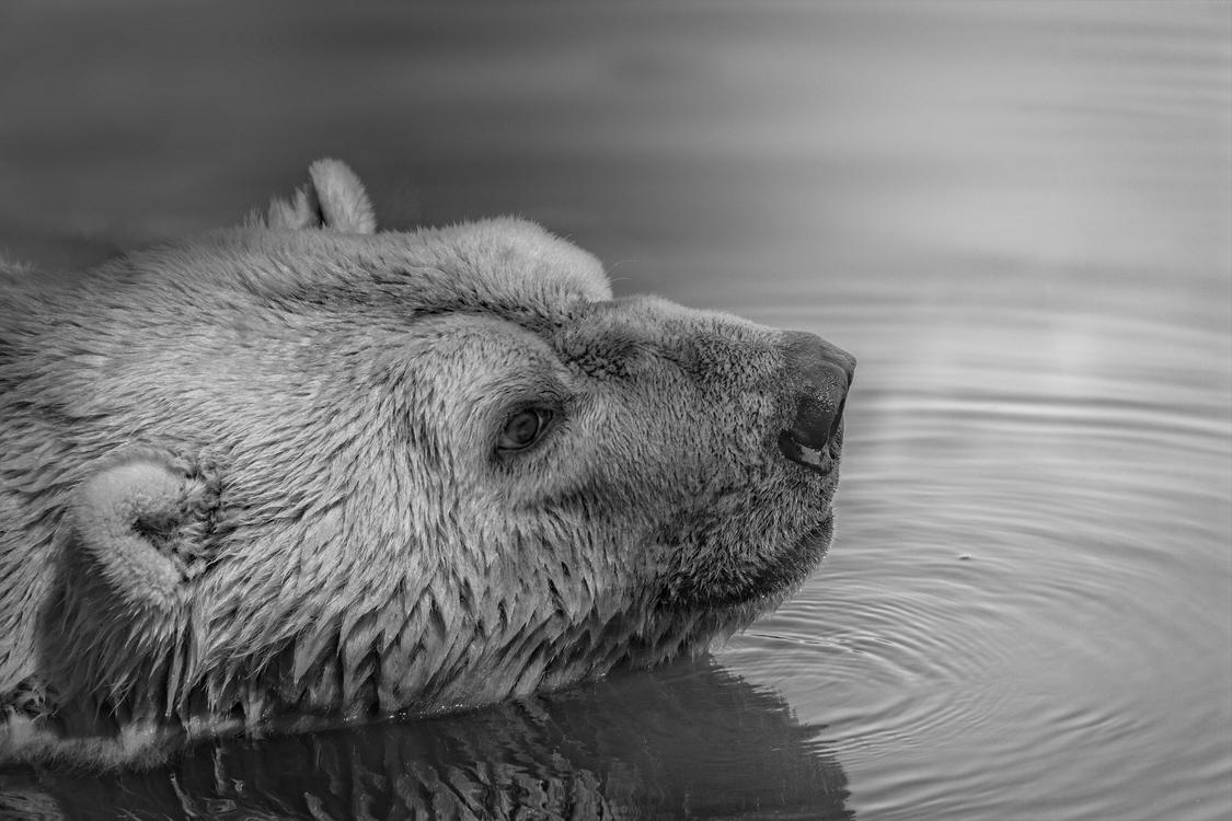 Water,Wildlife,Monochrome