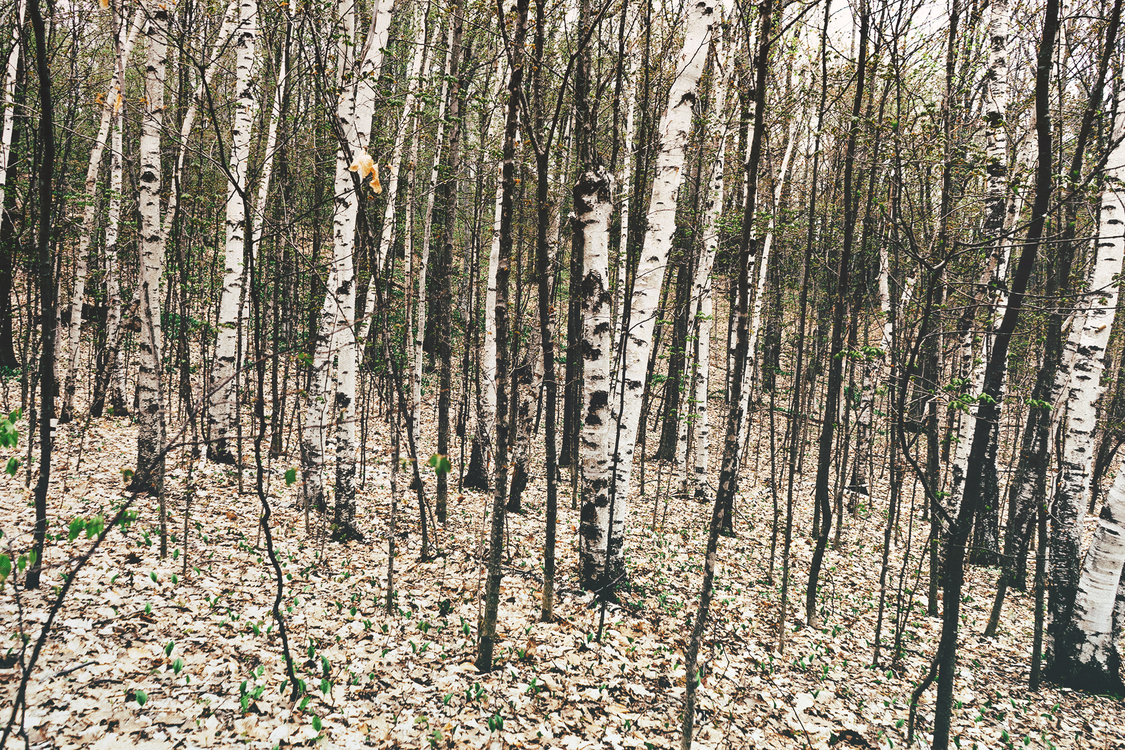 Biome,Plant,Northern Hardwood Forest Concept