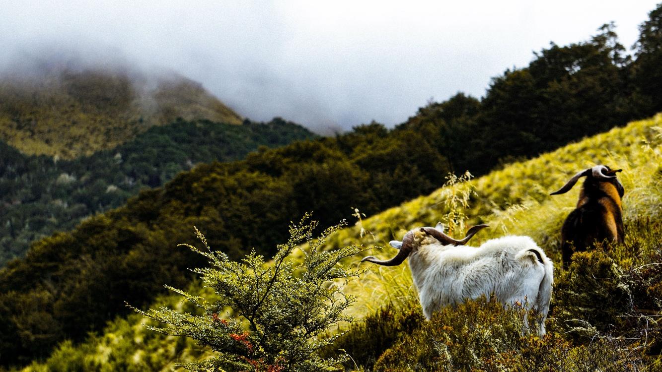 Mountain,Wildlife,Grass