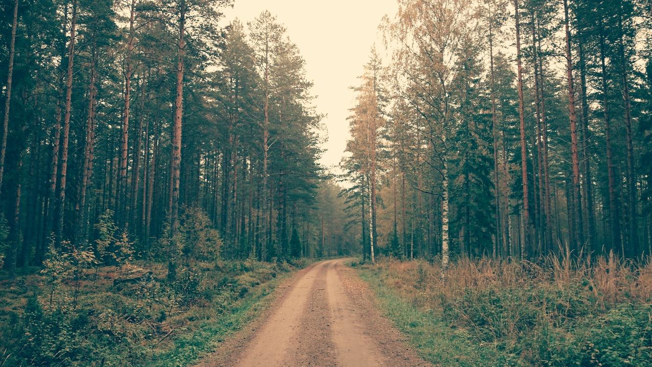 Meadow,Wilderness,Sky