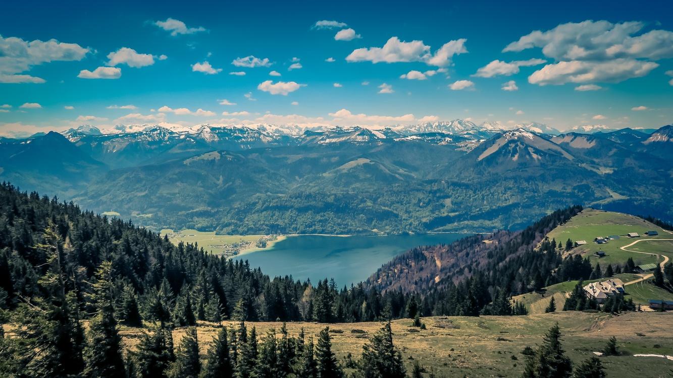 Meadow,Wilderness,Forest