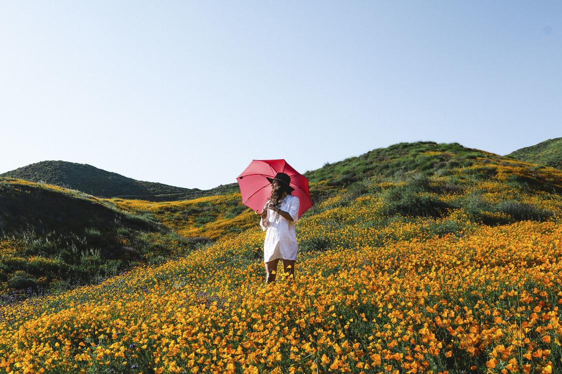 Mountain,Plant,Flower