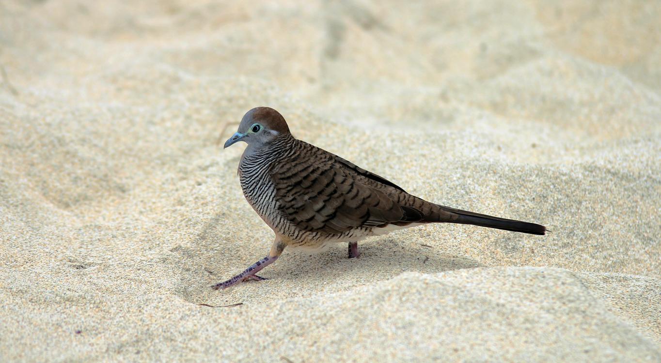 Wildlife,Cuculiformes,Bird