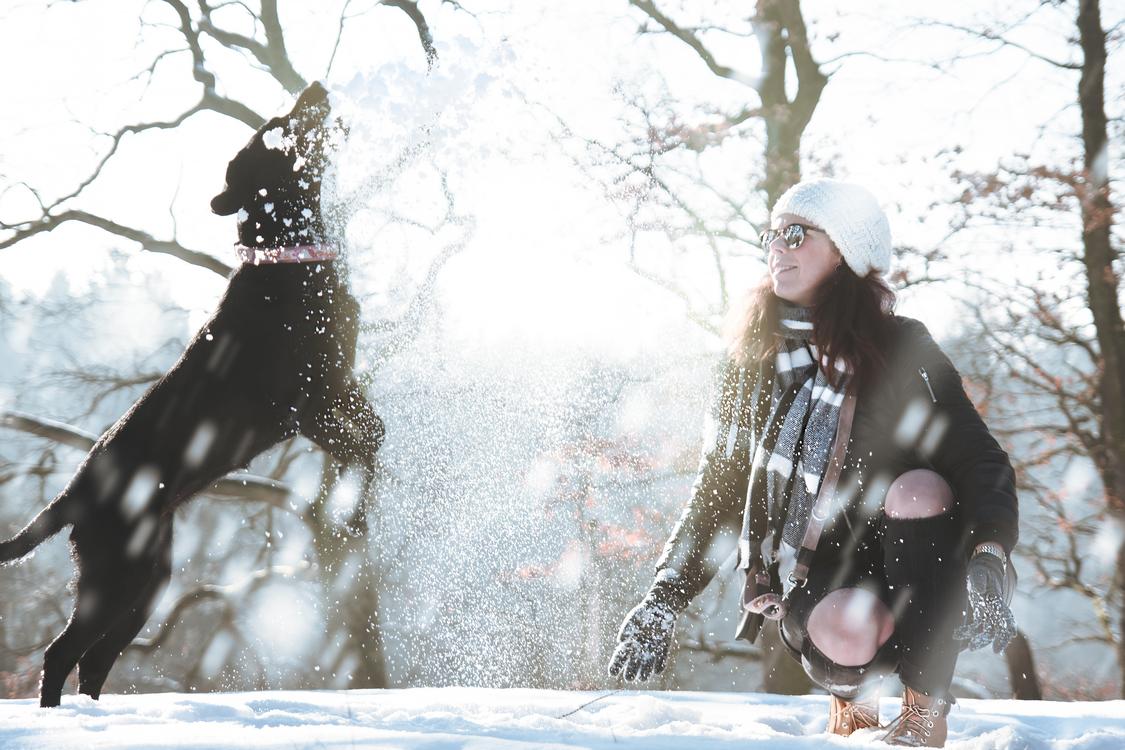 Winter,Tree,Frost