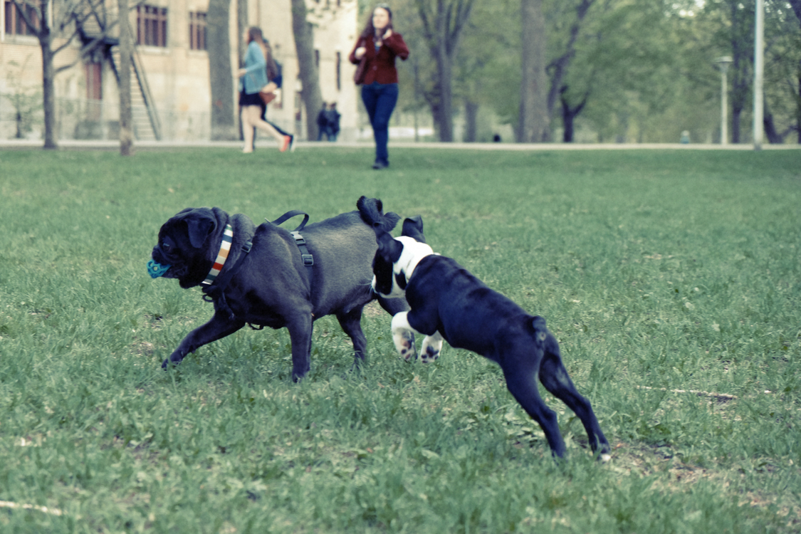 Obedience Training,Obedience Trial,Dog