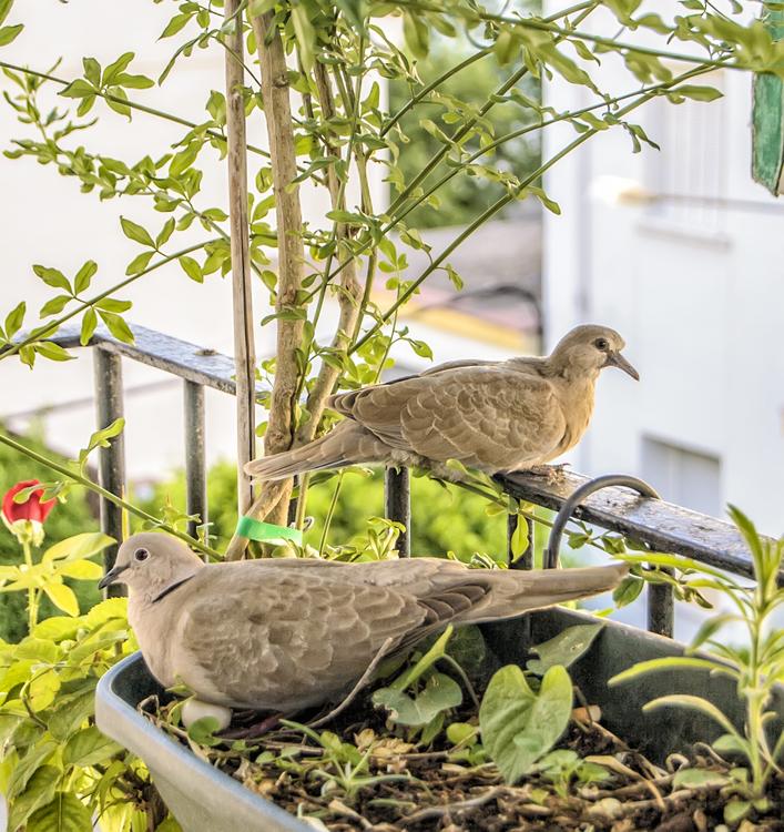 Fauna,Grass,Bird
