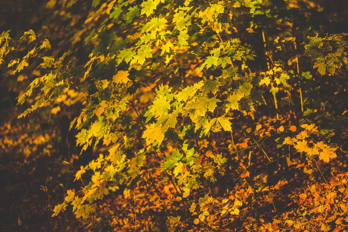 Computer Wallpaper,Leaf,Temperate Broadleaf And Mixed Forest