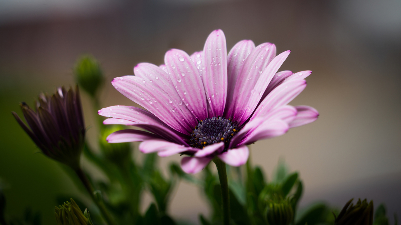 Pink,Pollen,Plant