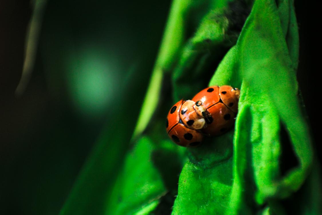 Close Up,Ladybird,Macro Photography