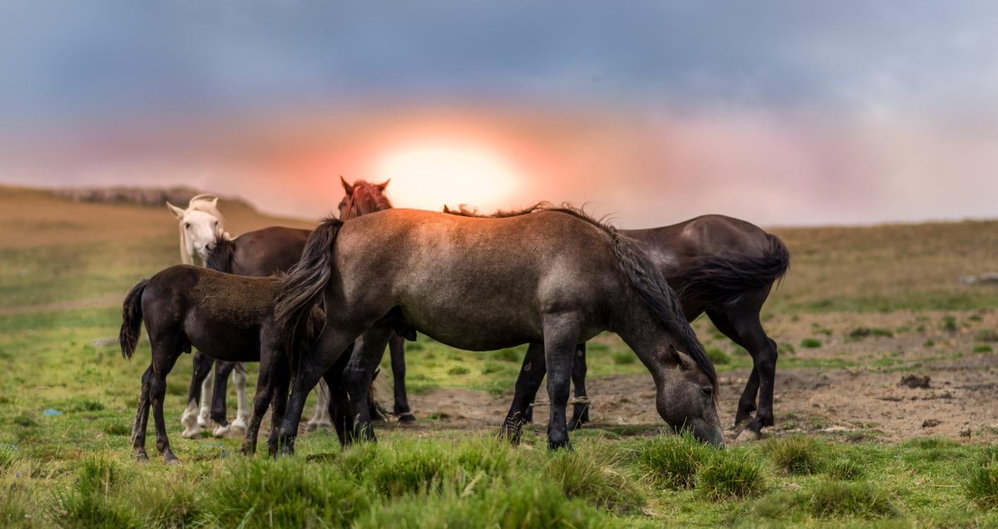 Livestock,Wilderness,Prairie