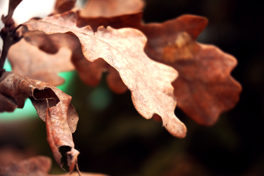 Macro Photography,Twig,Leaf