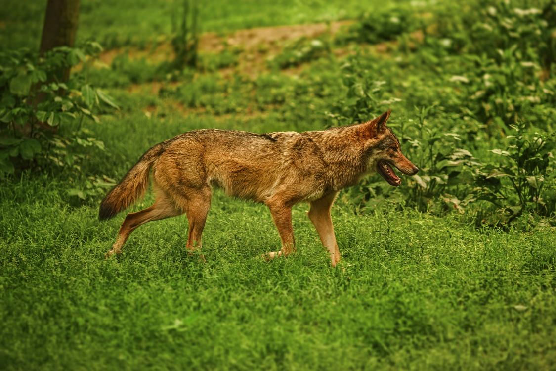 Wildlife,Meadow,Terrestrial Animal
