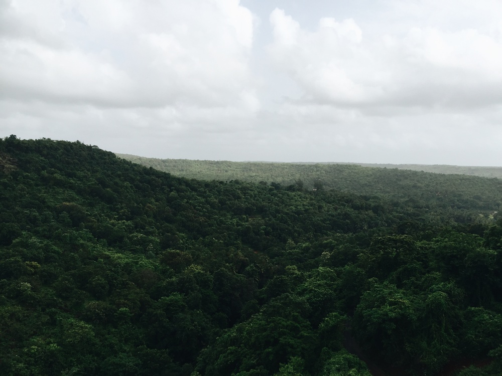 Plain,Shrubland,Tropical And Subtropical Coniferous Forests