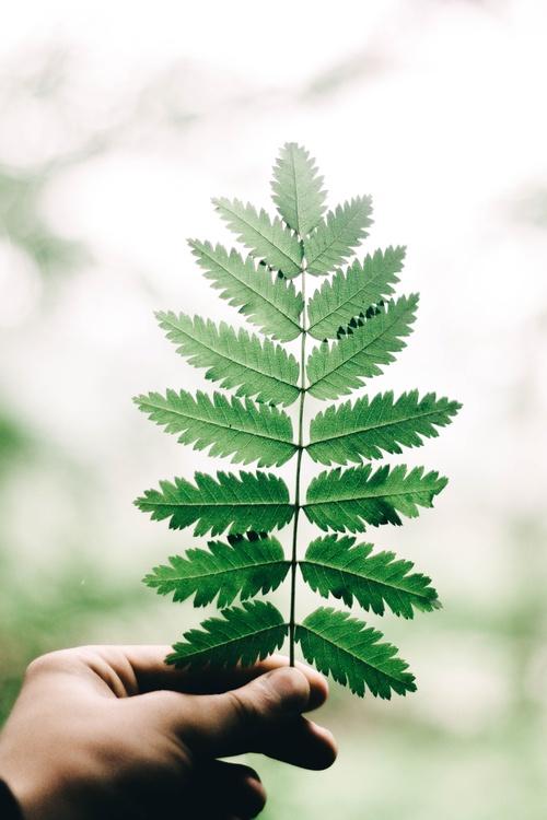 Tree fern Branch Tree fern Woody plant