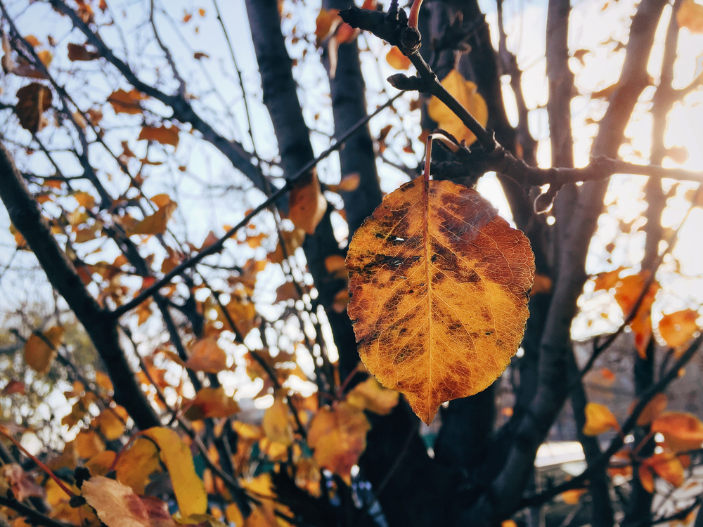 Autumn,Tree,Plant