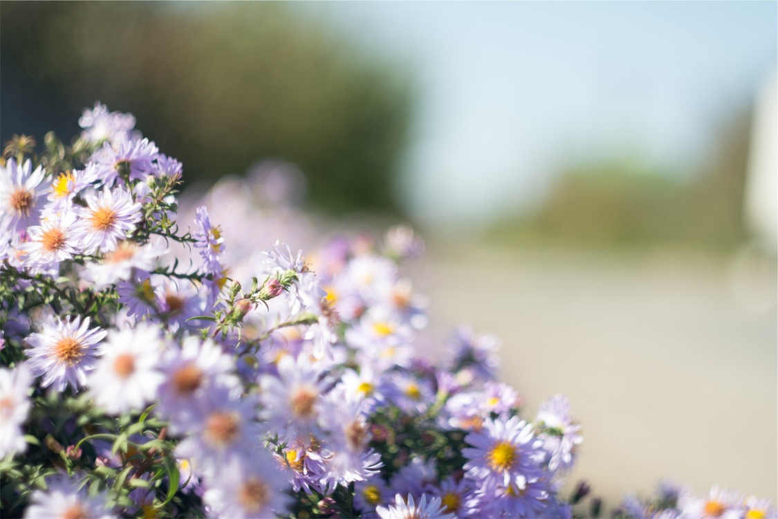 Plant,Flora,Blossom