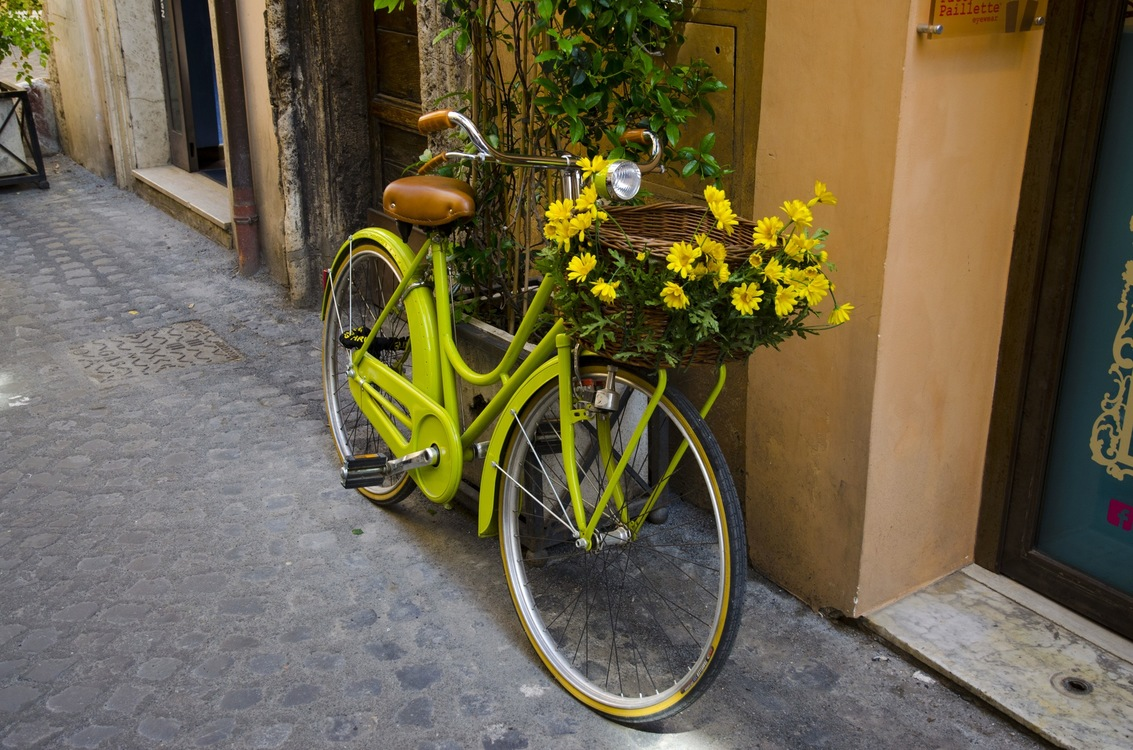 Bicycle Accessory,Plant,Flower
