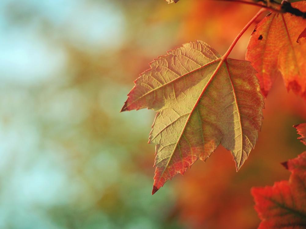 Leaf,Sky,Macro Photography