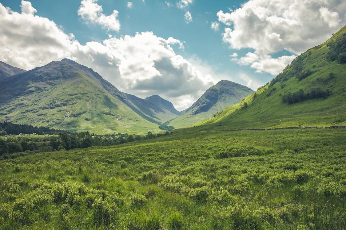 Meadow,Wilderness,Shrubland