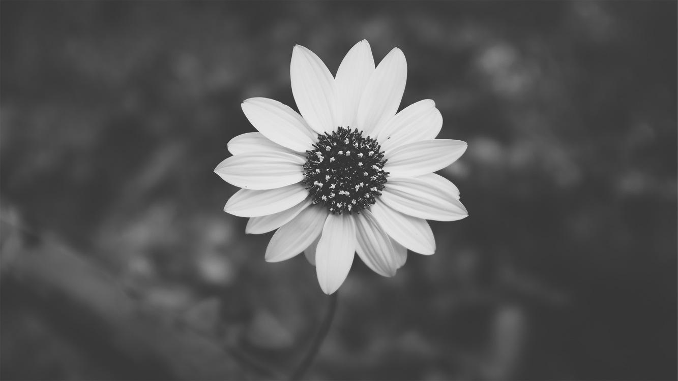 Black And White Aesthetics Desktop Wallpaper Art Free Images