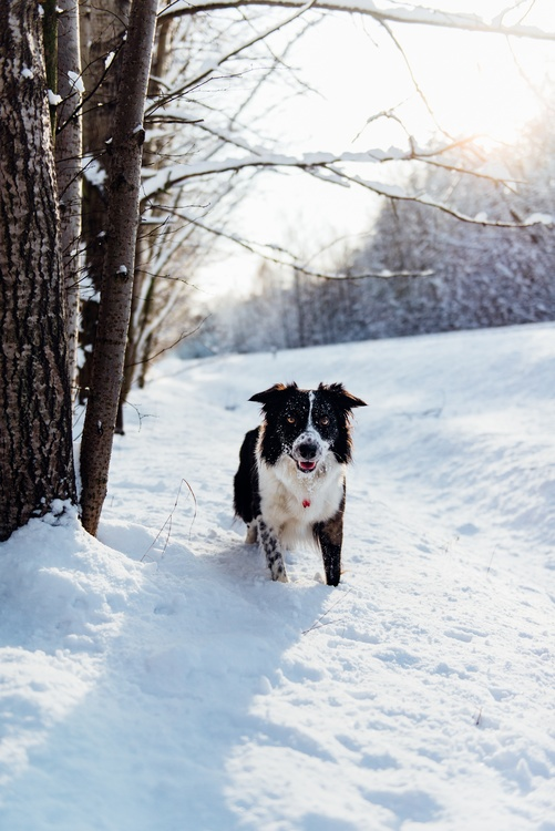 Winter,Dog,Freezing