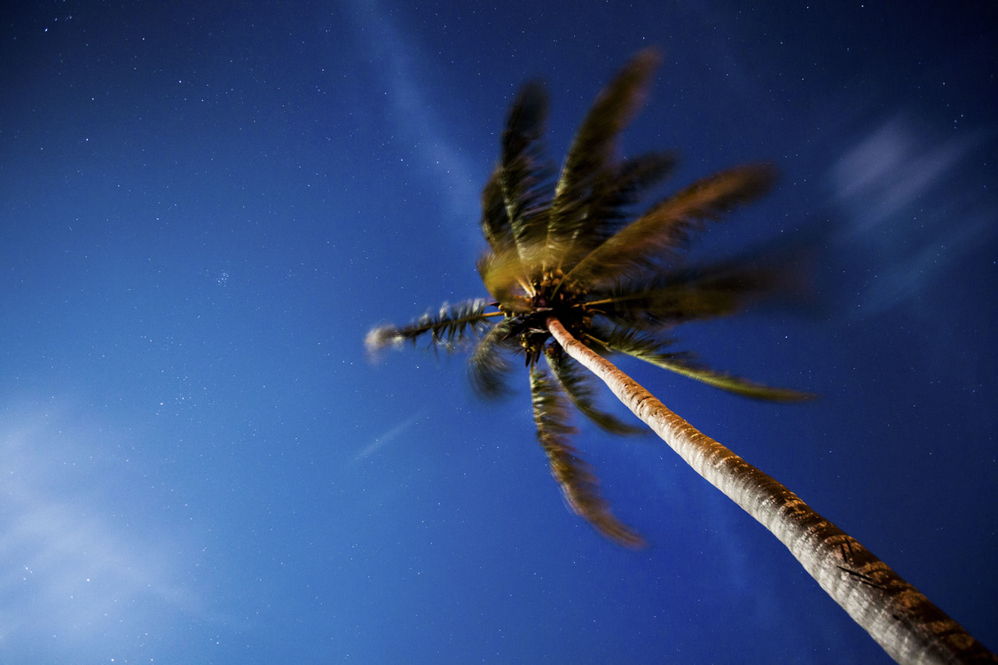 Blue,Dragonfly,Stock Photography