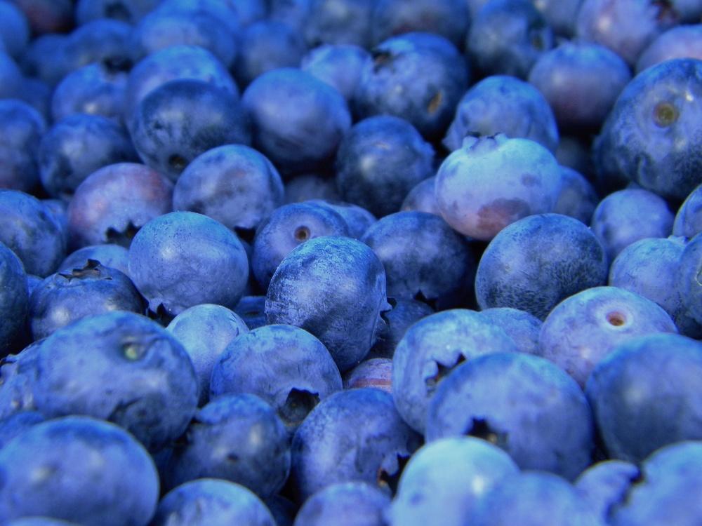 Blue,Huckleberry,Bilberry