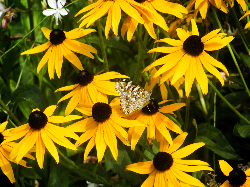 Daisy Family,Pollen,Plant