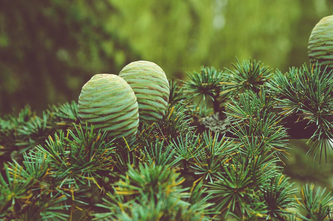 Biome,Plant,Ecosystem