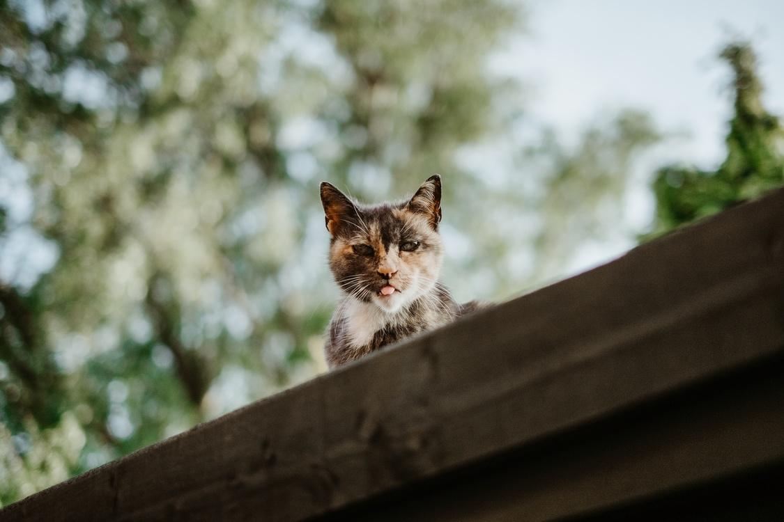 Wildlife,Grass,Small To Medium Sized Cats