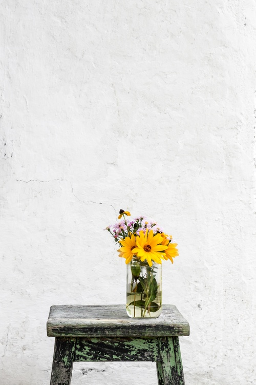 Plant,Flower,Wall