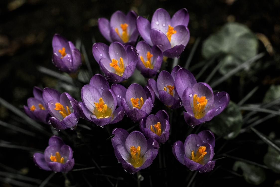 Iris Family,Plant,Flora