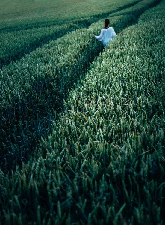 Biome,Grass Family,Wheat