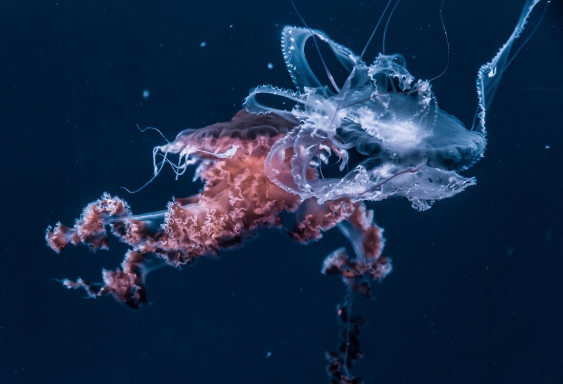 Marine Invertebrates,Marine Biology,Underwater