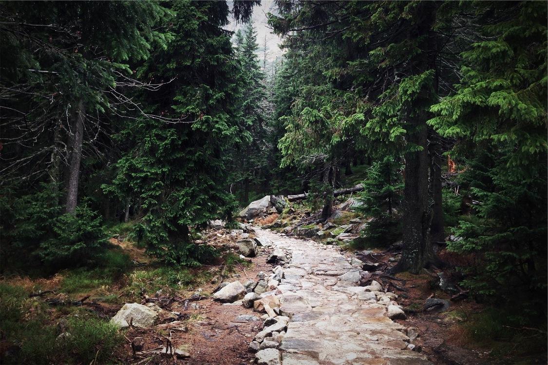 Valdivian Temperate Rain Forest,Stream,Stream Bed