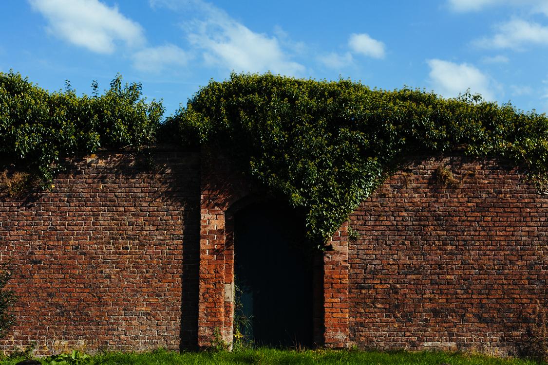 Facade,Building,Plant