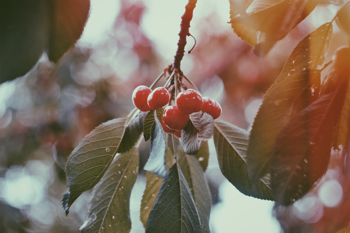 Plant,Close Up,Leaf