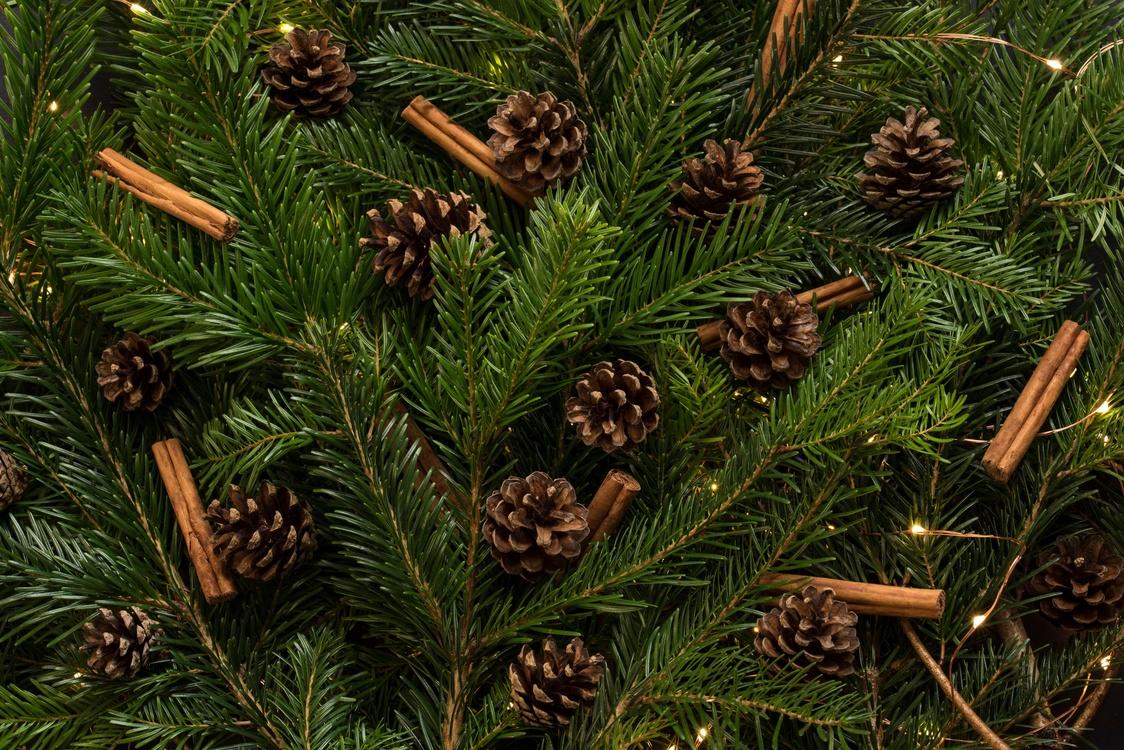 Fir,Pine Family,Christmas Decoration