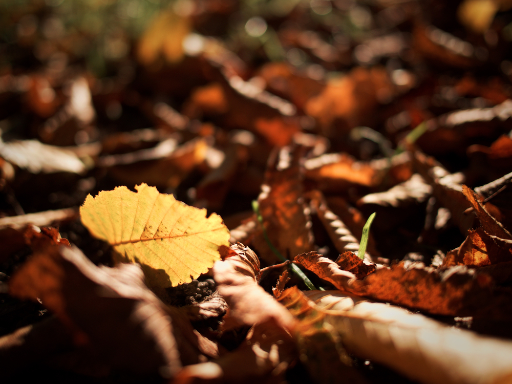 Plant,Leaf,Soil