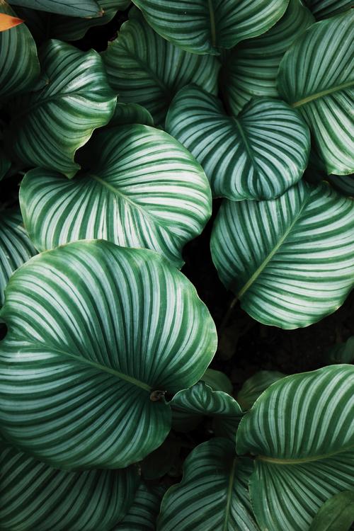 Plant Leaf Desktop Wallpaper Background Royalty Free Photo
