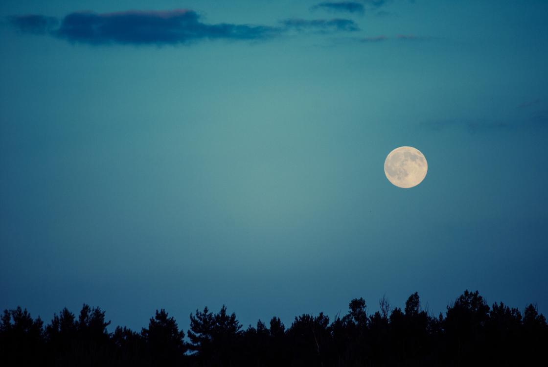 Night sky Lunar eclipse Tree Cloud