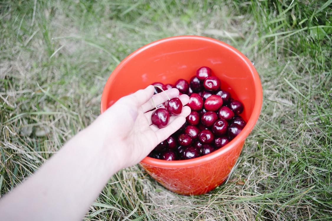 Plant,Lingonberry,Frutti Di Bosco