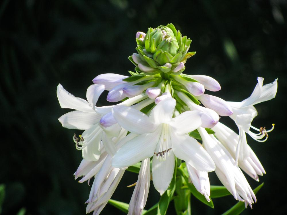 Flora,Plant,Flower
