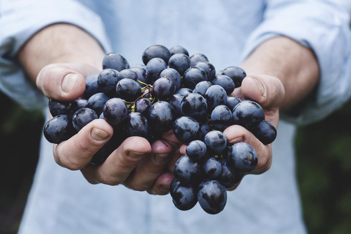 Plant,Grape,Grapevine Family