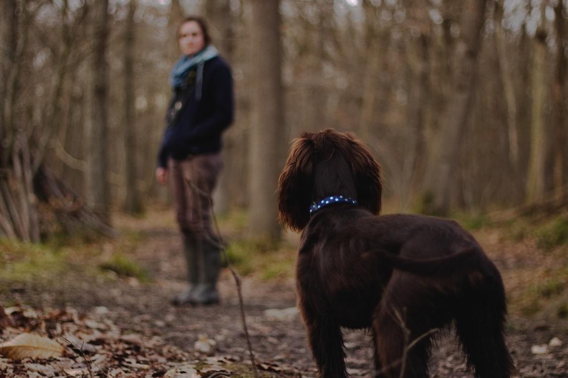 dog walking pet sitting dog training emotional support animal free