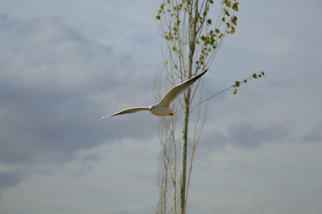 Wildlife,Tree,Sky
