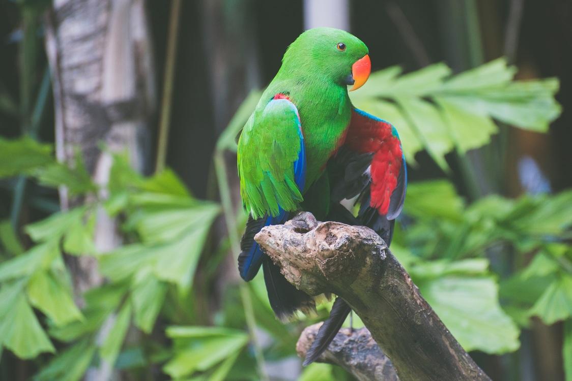 Macaw,Parrot,Lorikeet