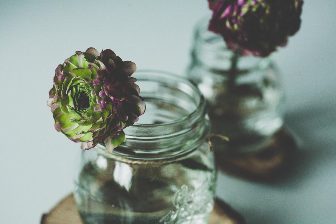 Flower,Mason Jar,Petal