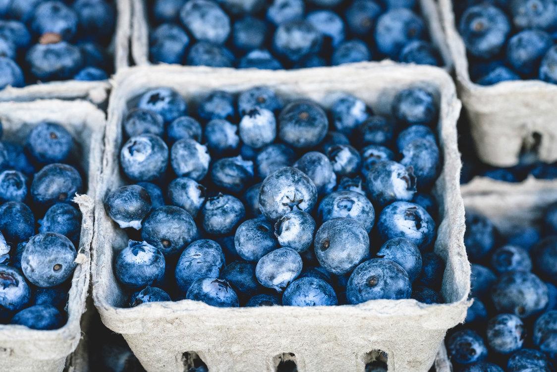 Blue,Plant,Bilberry