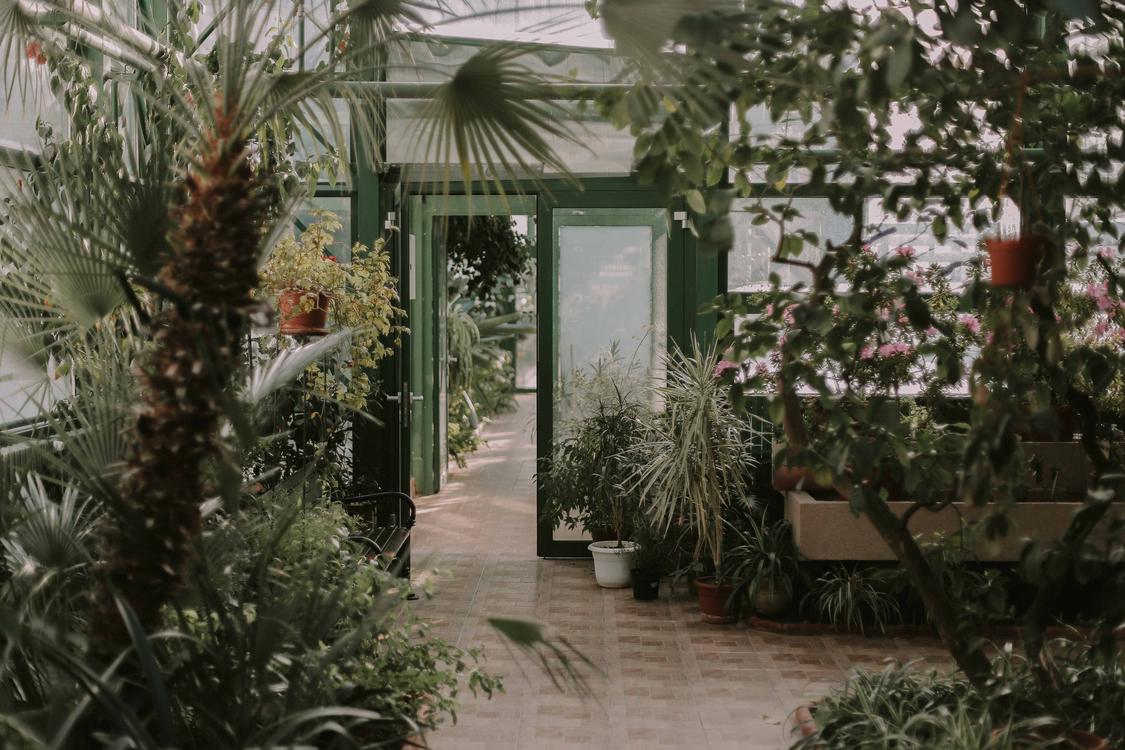 Plant,Flora,Garden